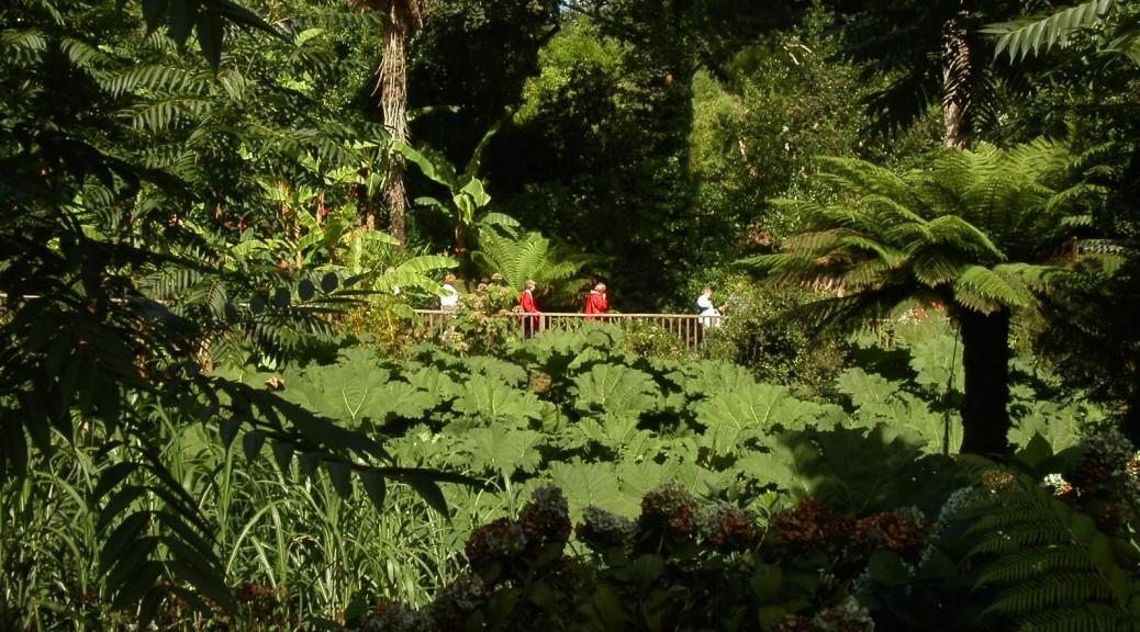 Jungle path 1