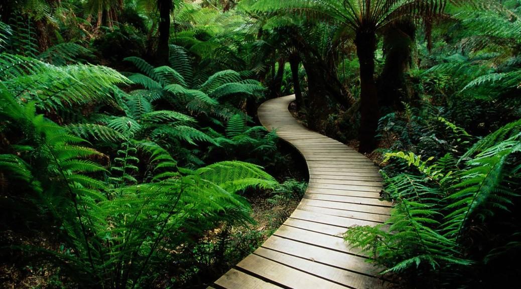 Jungle path 2